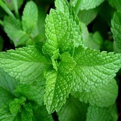 25 Best Herbs To Grow In Your Kitchen Garden The Herb Exchange