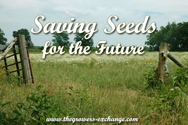 how-to-save-herb-seeds