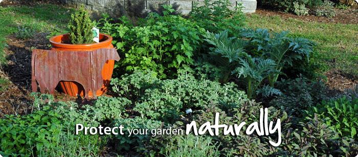 protect-garden-naturally