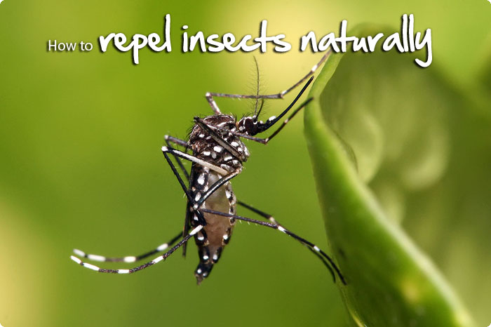 repel-insects-naturally