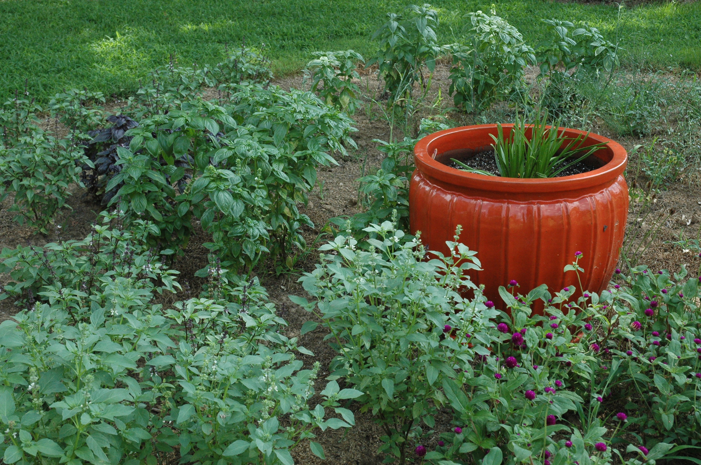Fall Gardening- My Favorite Time Of The Year