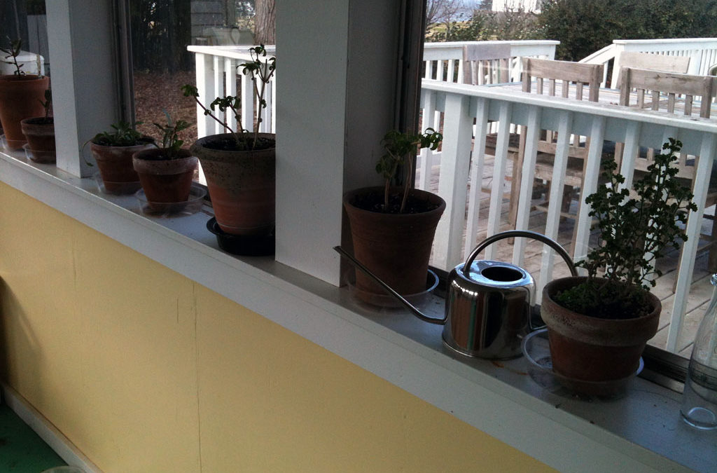 Potted Herbs Make Great Indoor Accents