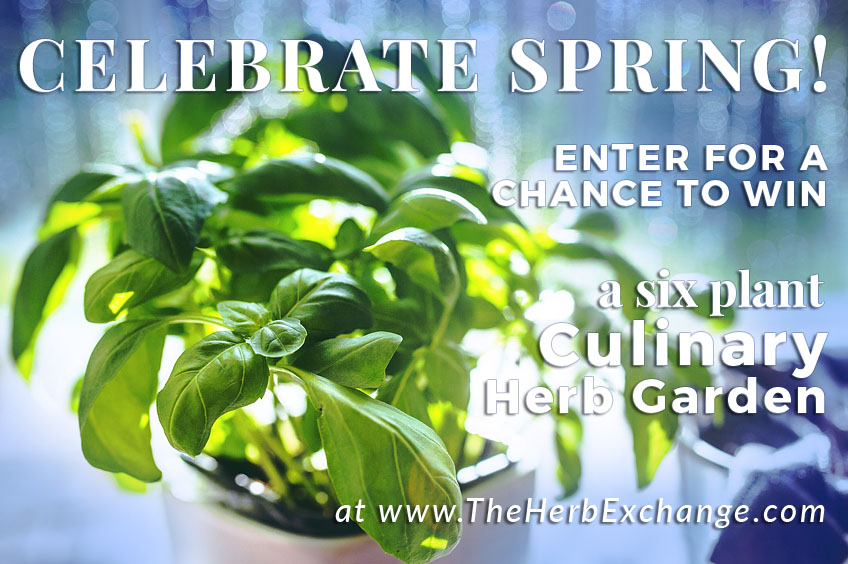 Spring Culinary Herb Garden Giveaway