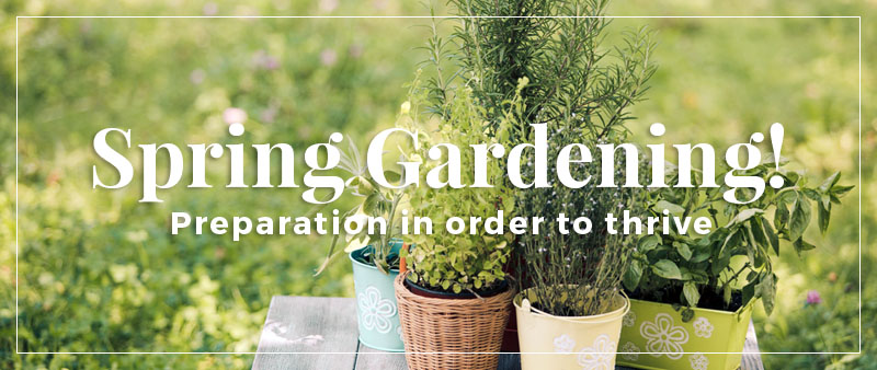 Herb Gardening: It's About Spring Time