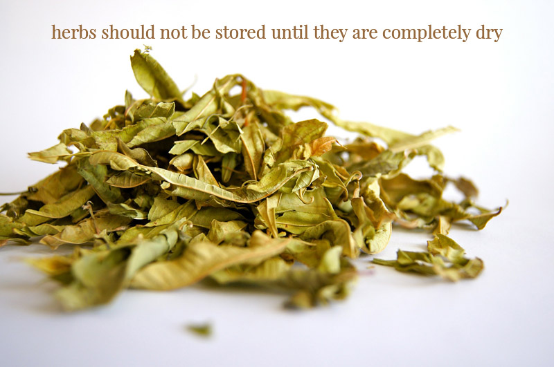 herbs-completely-dry