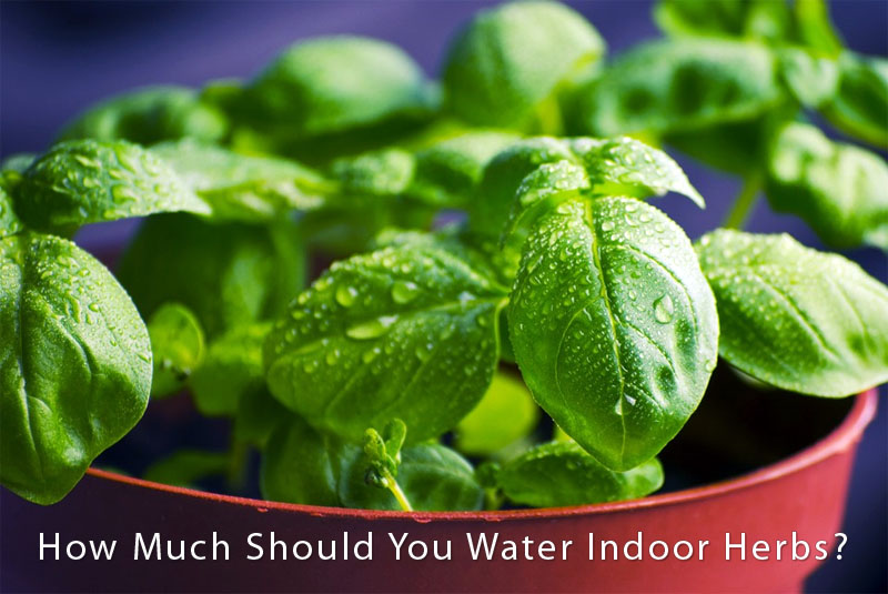 how-much-water-indoors