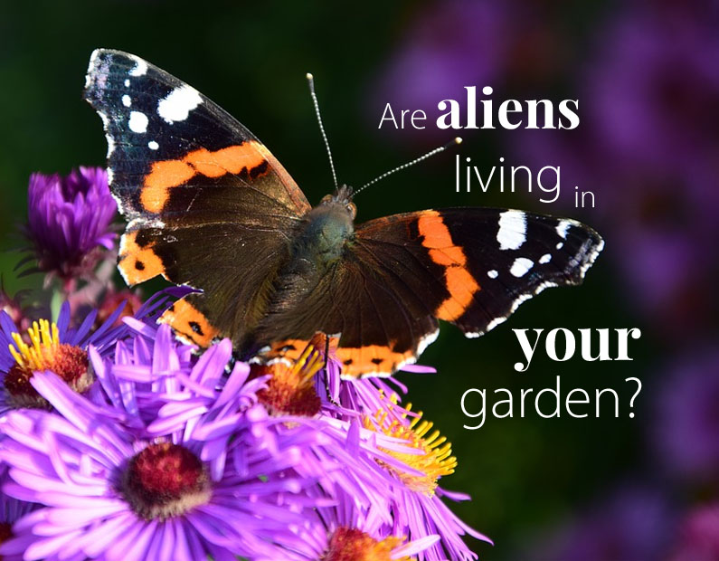 Native Plants: Is Your Yard Full of Aliens?