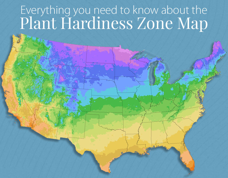 Everything You Wanted to Know About Plant Hardiness Zones (*but were afraid to ask)