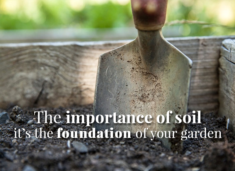 The Importance of Soil: The Foundation of Your Garden