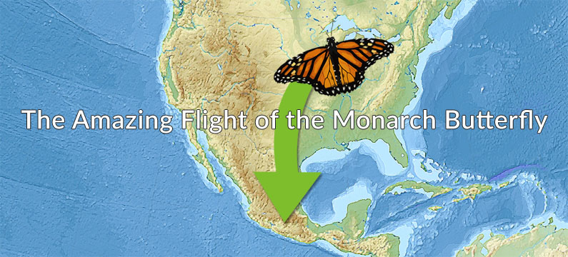 The Amazing Flight of the Monarch Butterfly