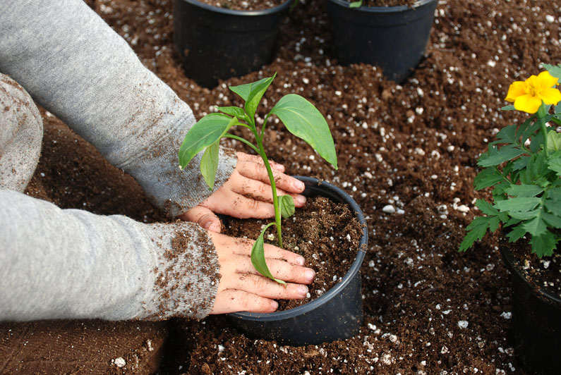 Gardening With Children: Teach Your Kids To Love Mother Nature