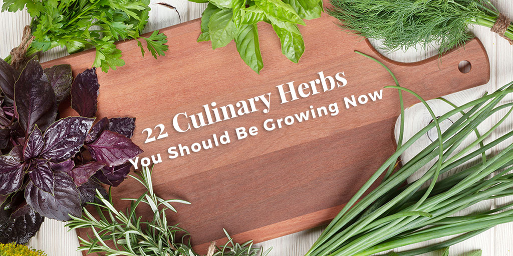 Fall Into The Perfect Culinary Herb Garden
