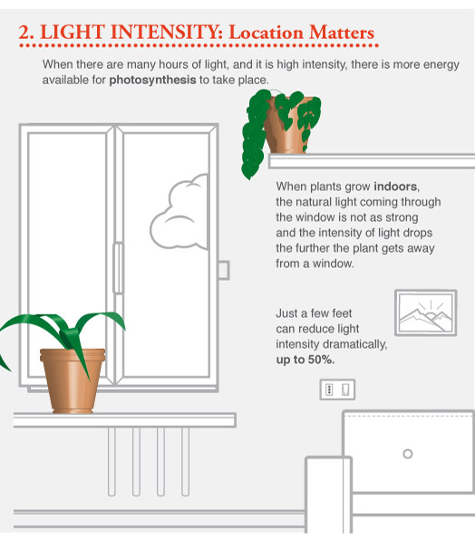 Tips for Growing Herb Plants Indoors - The Herb Exchange