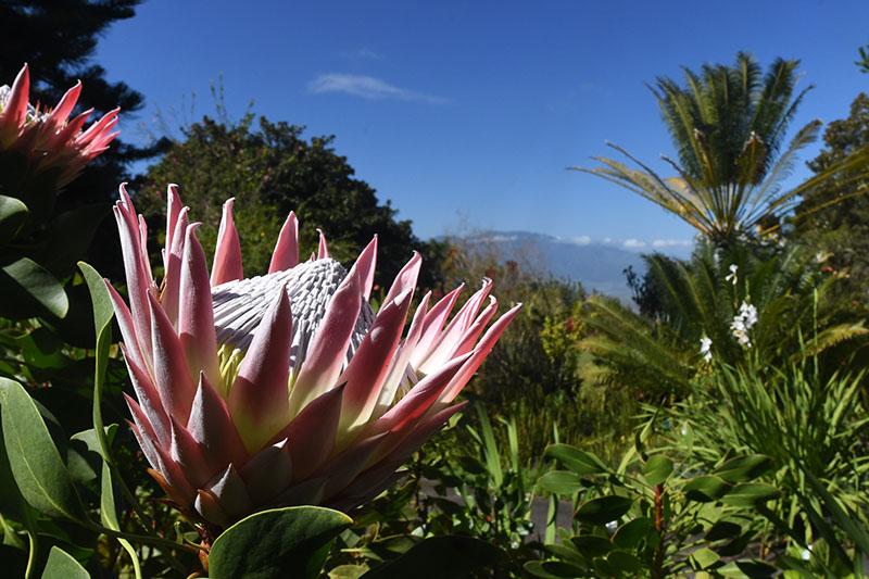 Maui: 4,000 Miles Away, but Still Feels Like Home