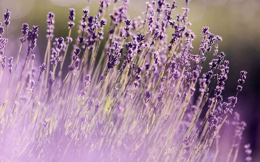 Herbal Aromatherapy: Do Scents Make Sense?