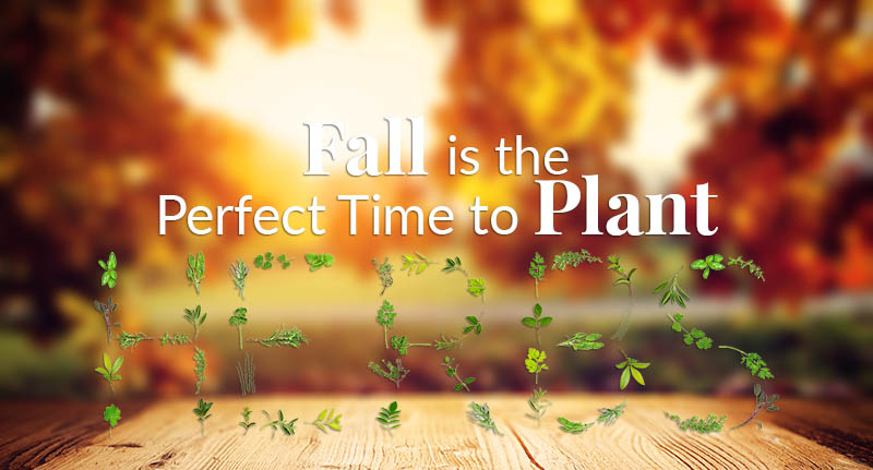 A Time to Plant, Fall Herb Gardening