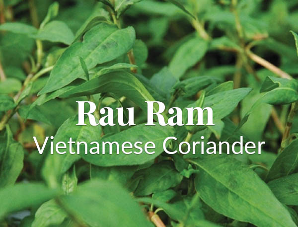 Rare and Unusual:  Rau Ram – Vietnamese Coriander Summer Salsa Recipe