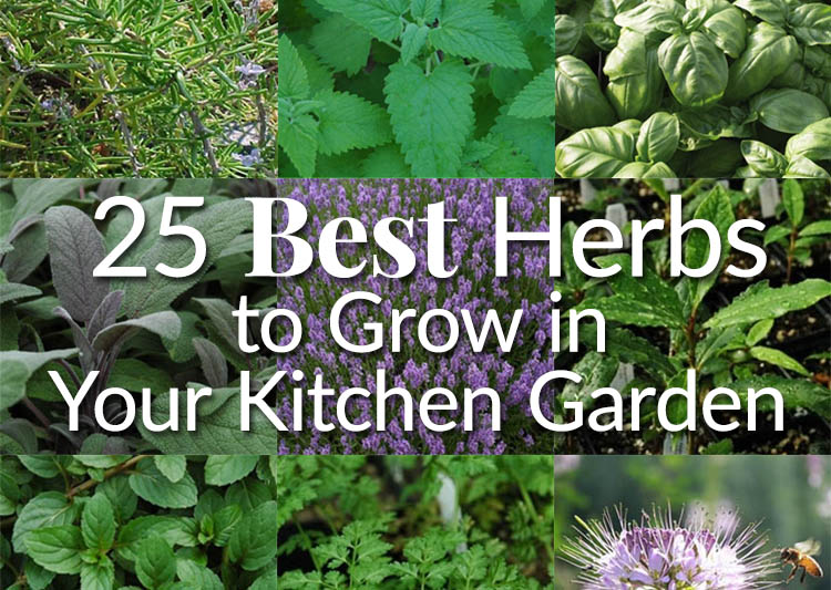25 Best Herbs to Grow in Your Kitchen Garden