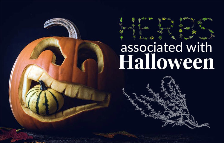 Herbs Associated with Halloween