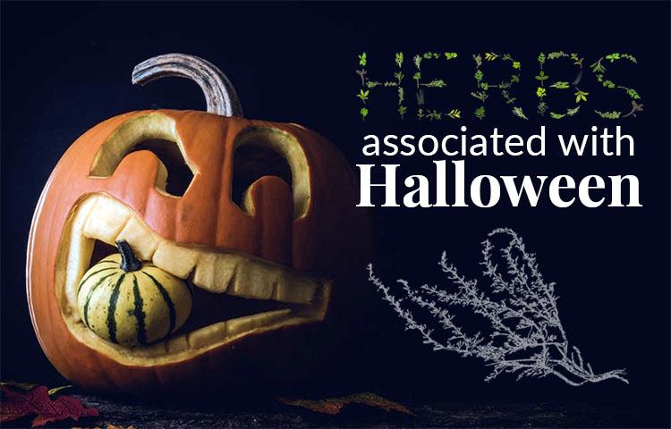 Herbs Associated with Halloween