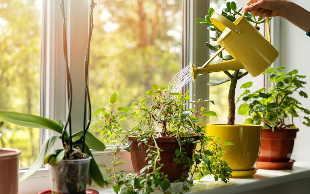 Grow Plants Indoors This Fall