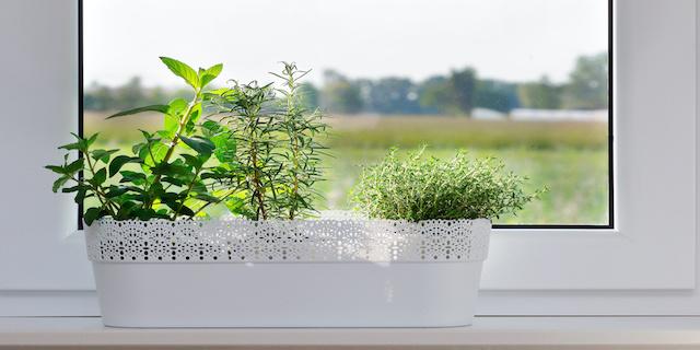 An Indoor Aromatic Herb Oasis