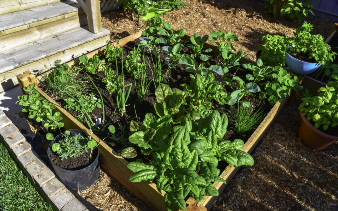 Container Gardening 101: Tips and Tricks for Starting a Container Garden