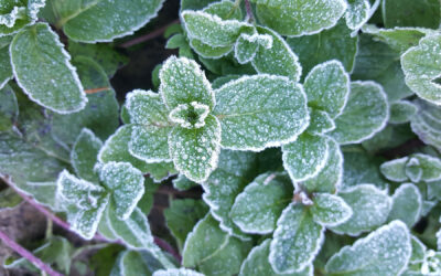 Growing Herbs in the Winter: How to Channel Mother Nature Every Month of the Year