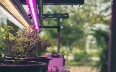 The Unscientific Guide to Grow Lights: How They Work & Why You Need One