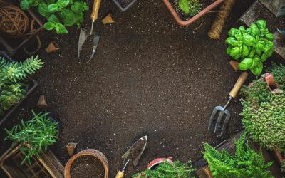 25 Best Herbs to Grow in Your Kitchen Garden