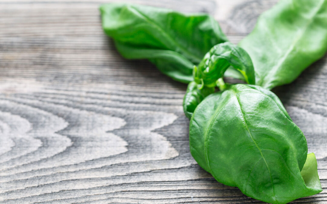 The Amazing Abilities of Basil: It's Not Just Pesto Anymore