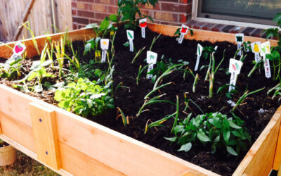 The Understandable Guide to Companion Planting: How to Find Soil-Mates in the Garden