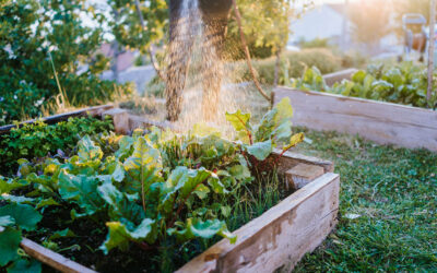 Does Companion Planting Really Work?