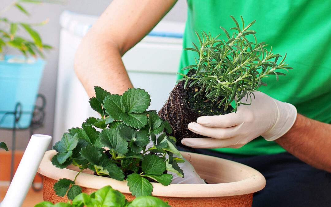 How to Help Your Herbs Beat the Heat