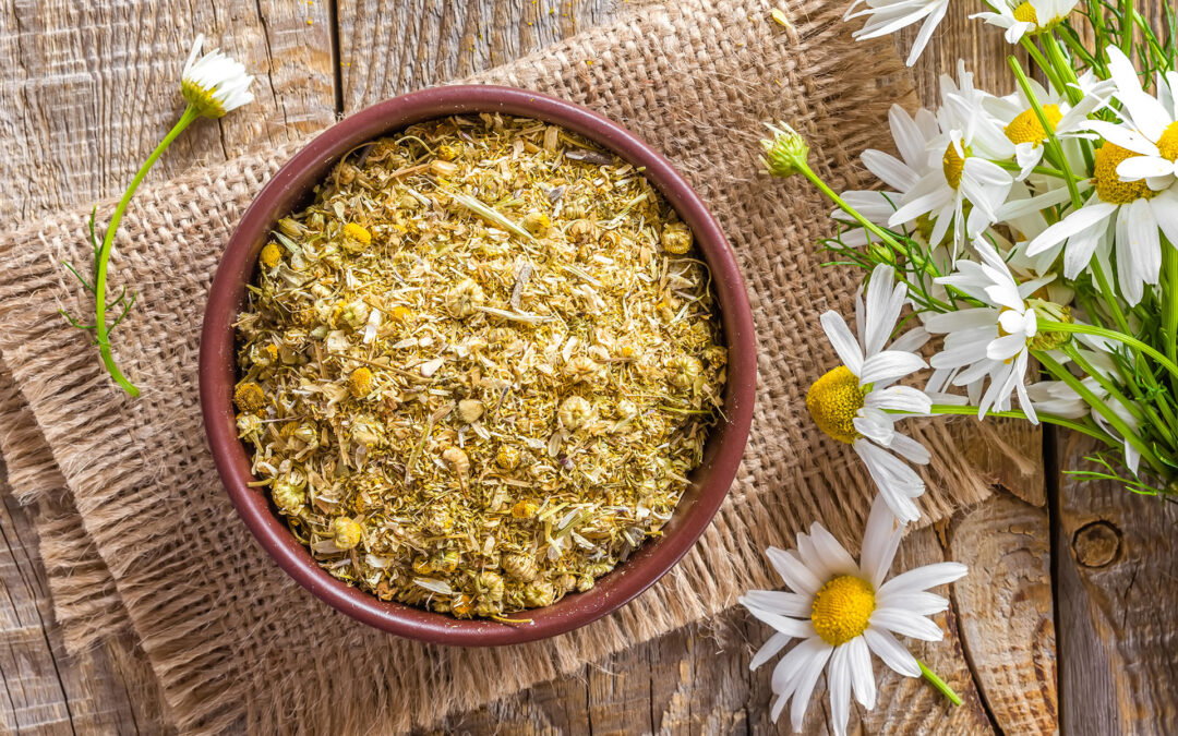 Your Essential Guide to Harvesting Medicinal Flowers