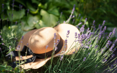Get Your Shears Ready: Why, When, and How to Prune Your Lavender