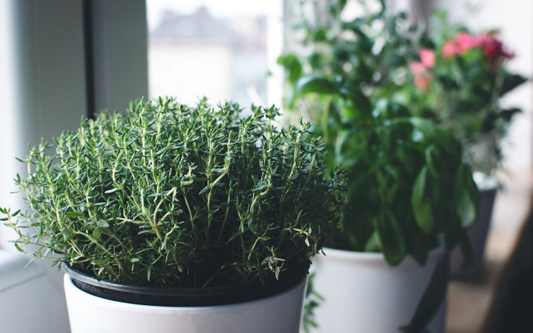 Herbs to Grow in Winter: 10 Herbs for Cold-Season Harvests